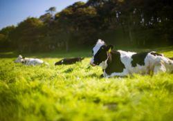 L'antibiorésistance chez les animaux : que faut-il savoir ?